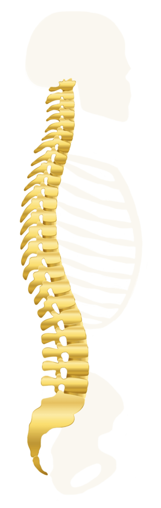 simmons specific chiropractic in midland michigan specifically handles your spine